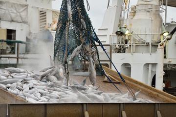 冷凍の鰹 船おろし作業 鰹節