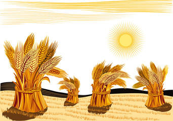 rural landscape with sheaves of ripe wheat