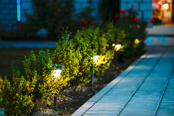 Night View Of Flowerbed With Flowers Illuminated By Energy-Savin Fototapete