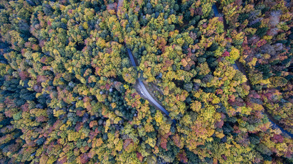 Aerial view of a road cutting through the forest