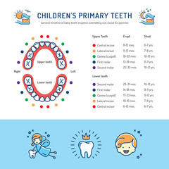 Children's Primary Teeth, Schedule of Baby Teeth Eruption. Сhildren's dentistry infographics