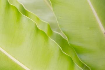 fern leaf select focus