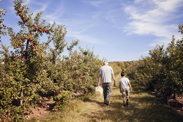 Grandfather and grandson (8-9) walking in orchard