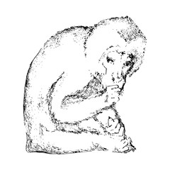 Hand drawn monkey. Black vector animal image. Sketch style.