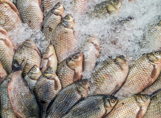 Fresh fish in the store