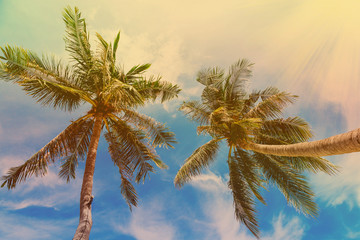 Palm trees at tropical coast, vintage toned and film stylized. Vintage coconut palm tree on beach blue sky with sunlight in summer, instagram filter. Tropical, Caribbean, Thailand, Mexico, Dominicana