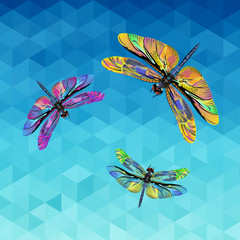 dragonfly, illustration, nature, wing, background, vector, insect