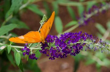 orange butterfly purple flower