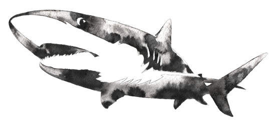 black and white monochrome painting with water and ink draw shark illustration