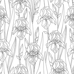 Vector seamless pattern with outline Iris flowers, bud and leaves in black on the white background. Floral background with ornate Iris in contour style for spring or summer design and coloring book.