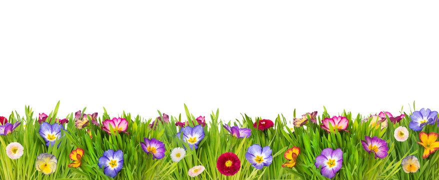 Farbenfrohe Frühlingswiese