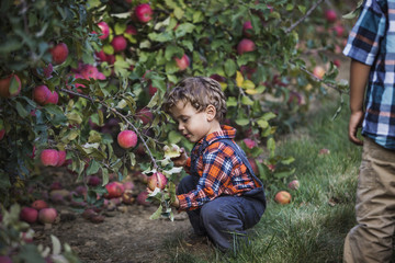 Boy picking apple from tree