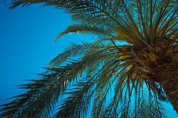 Palm trees against blue sky, Palm trees at tropical coast, coconut tree,summer tree/ Background