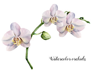 Watercolor branch with  white orchids. Hand painted floral botanical illustration isolated on white background. For design or print.