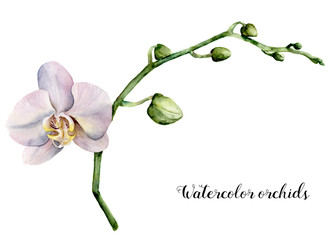 Watercolor white orchids. Hand painted floral botanical illustration isolated on white background. For design or print.