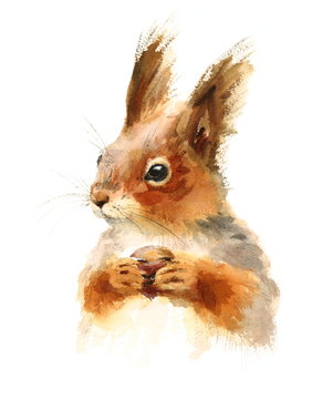 Watercolor Squirrel Holding a Nut - Hand Drawn Illustration of Animal isolated on white background