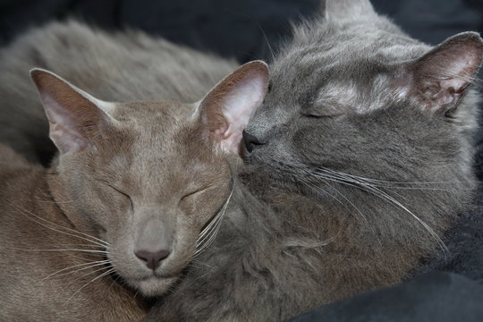 Two cats sleeping close up on faces