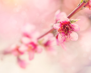 Pink tree flowers spring blossom