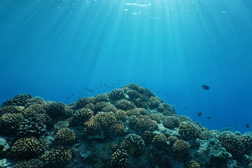 Pacific ocean sunlight underwater with corals and fish, natural scene on the outer reef of Huahine island, French Polynesia