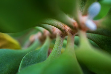 macro detail of a tropical plant with green leafs between light and shadow