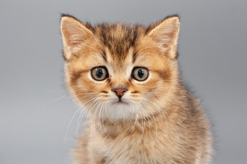 Little cute funny kittens on a gray background