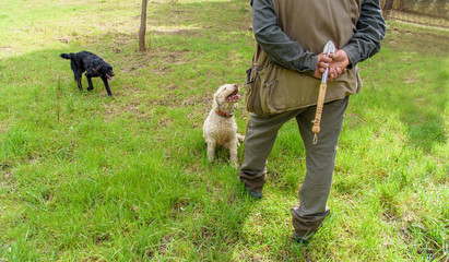 professional truffle hunter and his dogs search for truffles with digging tool