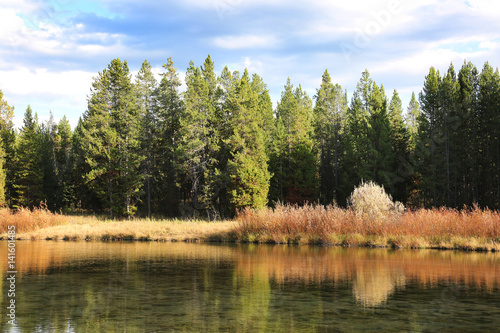 Wall mural Peaceful River Forest Reflection