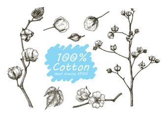 Cotton vector set hand drawing