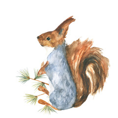 Squirrel . Decoration with wildlife scene. Pattern from forest inhabitant. Watercolor hand drawn illustration.