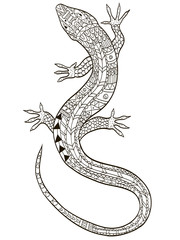 Lizard coloring vector for adults