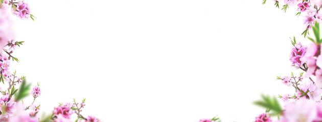 Cornice di fiori primaverili o biglietto d'auguri