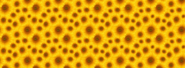 Wall Mural -  banner flower sunflower  summertime