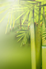 Beautiful bamboo nature background.
