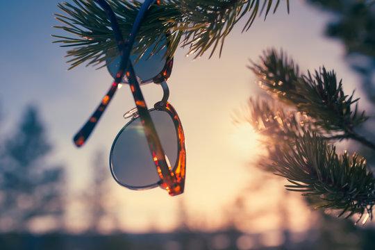 sunglasses shades sun glasses pine tree branch winter spring Finland Lapland Rovaniemi Sunset eye-wear hiker hiking break recreation recreational