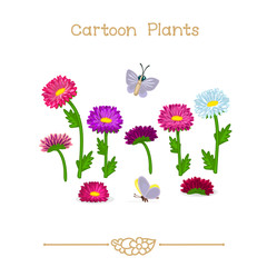 Plantae series cartoon plants: Asters