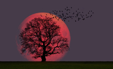 Lone tree with supermoon