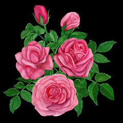 Bouquet of pink roses watercolor hand-painted, isolated on white