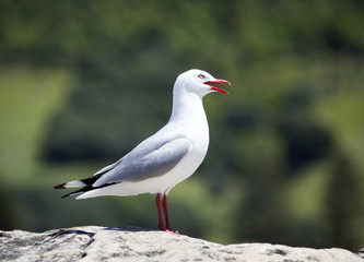 Close Seagull View