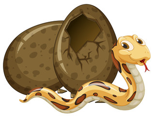 Rattlesnake hatching egg on white background
