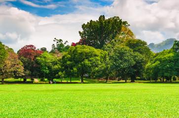 Keuken foto achterwand Lime groen Summer park with green lawn and blue cloudy sky.