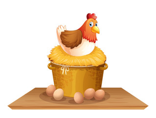 Hen in chicken nest