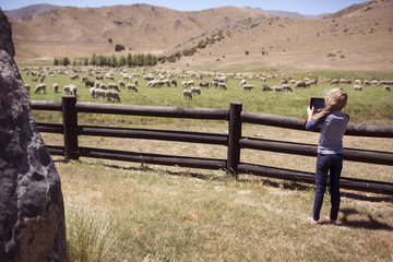 Rear view of girl photographing sheep through tablet computer while standing on field