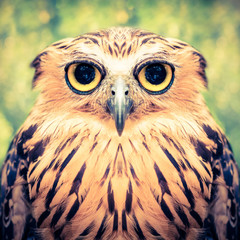 funny owl face close up with big eyes - retro vintage filter effect