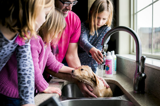 Family bathing puppy in kitchen sink at home