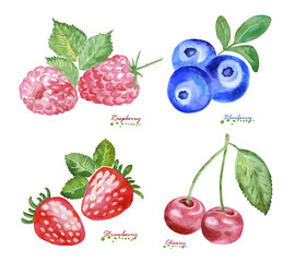 Watercolor Berries on white background.
