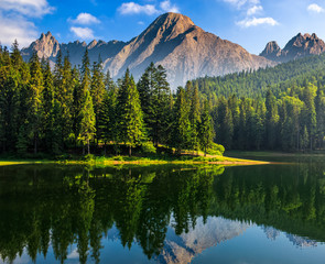 spruce trees near the lake in mountains