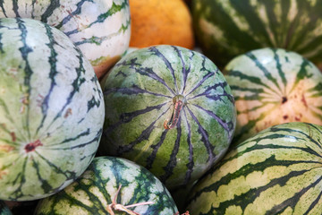 Water-melons lie on a market counter
