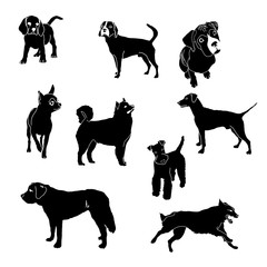 Vector silhouettes of dogs of different breeds
