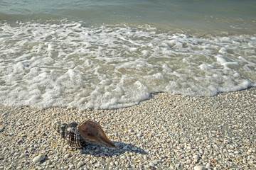 Conch Shell and surf on Sanibel Island.