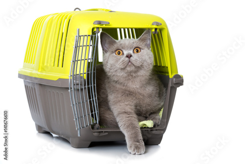 katze in transportbox stock photo and royalty free. Black Bedroom Furniture Sets. Home Design Ideas